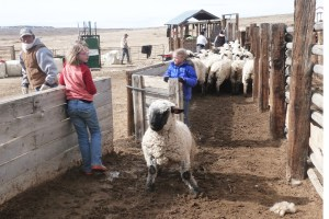 Siobhan and Raelyn capture the ewe