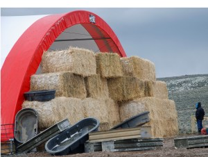 Lambing shed with straw windbreak