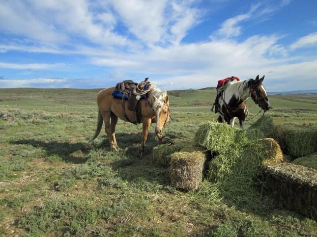 horses taking a break