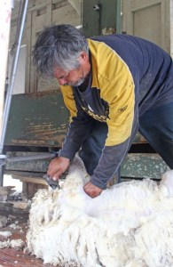 shearing at last!