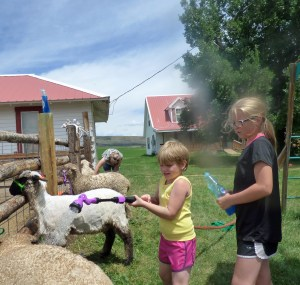 Maeve and Siobhan washing lambs