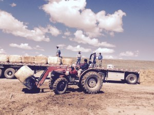 Loading the wool onto the flatbed