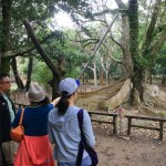 "Taiwan's southernmost ""Kenting National Forest Recreation Area"" Sea,、Mountain、Woods, Let's explore the nature blessed national park !"
