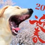 迎春!新年明けましておめでとうございます!今年もよろしくお願いします!