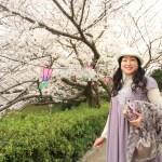"""Cherry Blossom Festival"" Sakura Sakura 340 at Hamamatsu Castle Park at Cherry Blossom Festival"