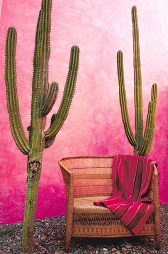 mexicain décors , motif mexicain, cactus