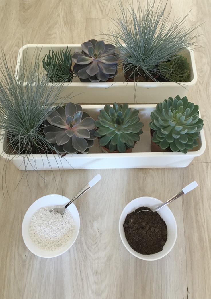 jardinière, plantes grasses