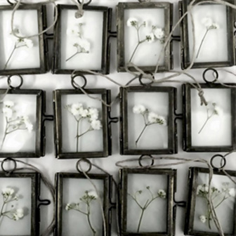 plante givrée sous verre
