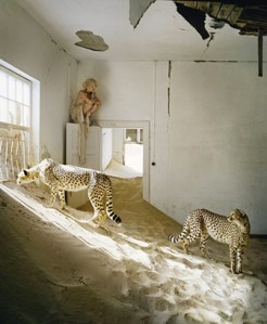 jaguar inspiration Tim walker