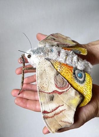 butterfly-mr-finch