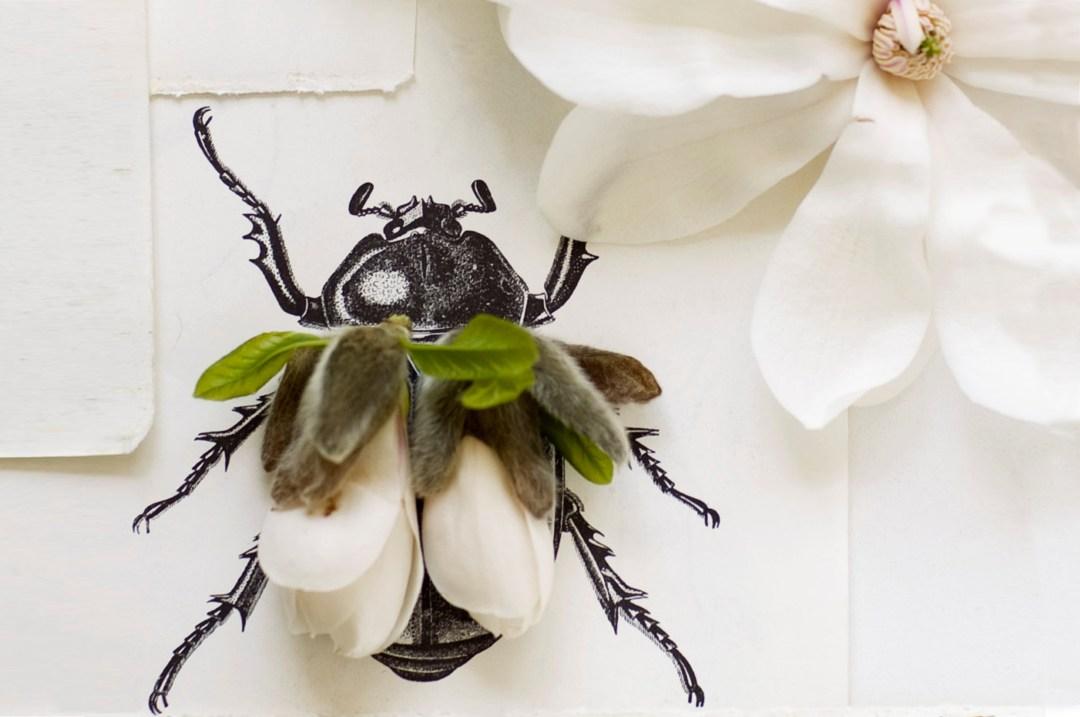 couverture insect mood coup de coeur