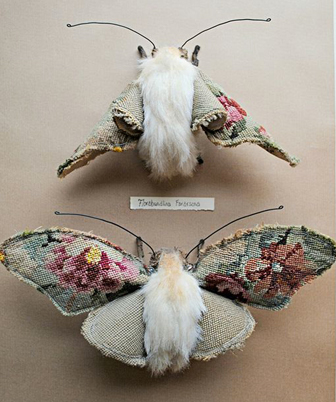 mood insecte et cabinet de curiosité
