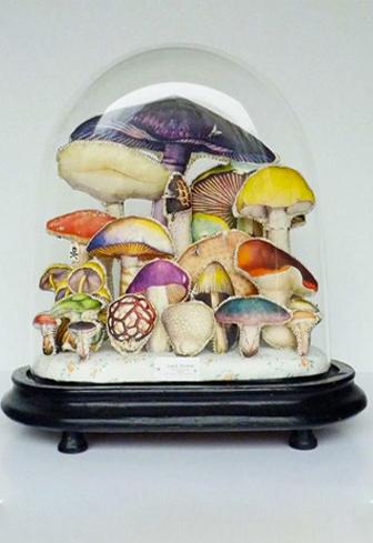 collection champignon sous cloche