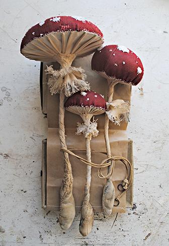 mushroom-finch