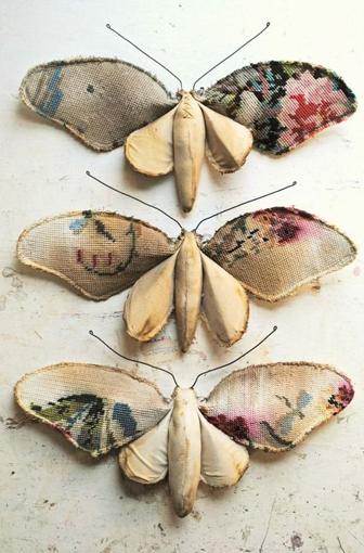 papillon mr finch