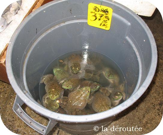 grenouilleschinatown