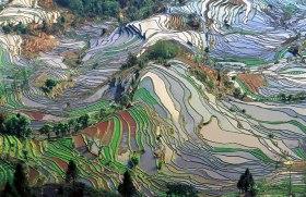 200502 - Rizières en terrasse dans le Yunnan une province du sud-ouest de la Chine by Jialiang Gao Wikipedia CC by-sa 3.0 - La Déviation