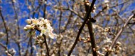 Trees bloomed with pungent blossoms