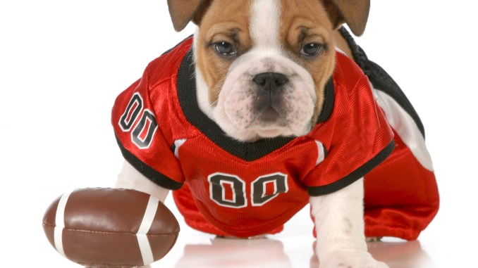 quality design 30d2d aac0f Score A Touchdown With These Football Dog Outfits - Ladies ...