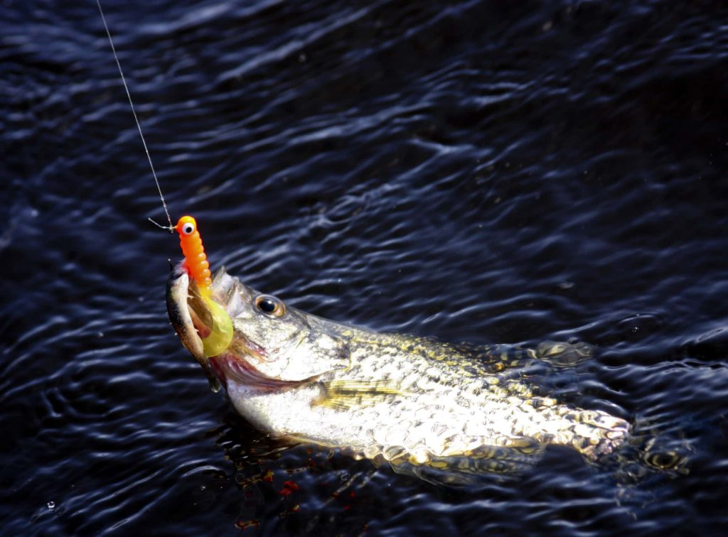 A great way to find crappie is with jigs and plastics.