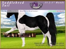 E-RH-15-17-SaddlebredTail