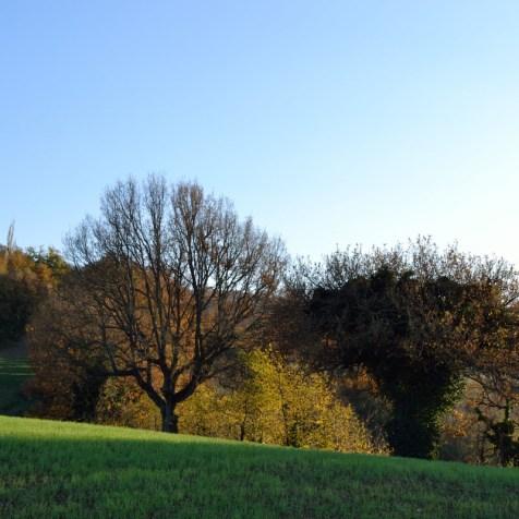 Panorama da Montelippo (Vallefoglia, PU)