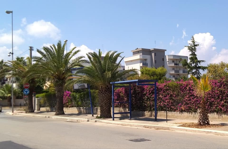 Pro Natura denuncia: le palme piantate in via Sant'Andrea sono già sofferenti