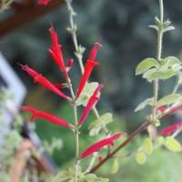 Le erbe aromatiche del nostro balcone