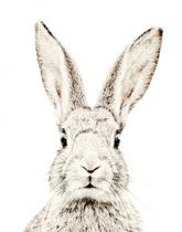 tapeta magnetyczna królik