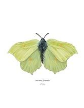 Plakat z rysunkiem motyla