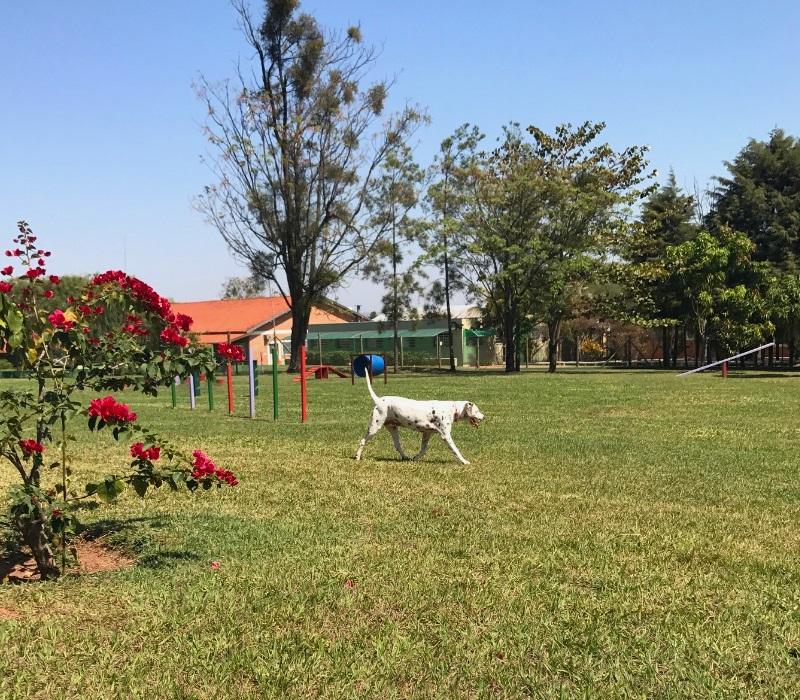 Maga brinca no gramado gigante do Dog Park