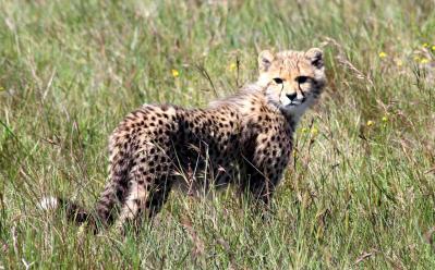 amakhala_safari (5)