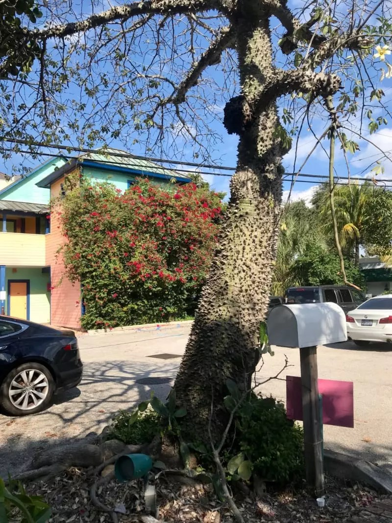 Yaxche árvore maia