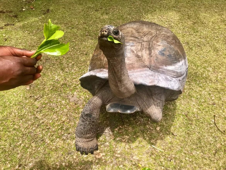 tartaruga gigante seychelles miramontes