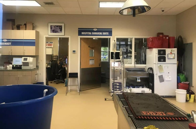 centro cirúrgico hospital tartarugas