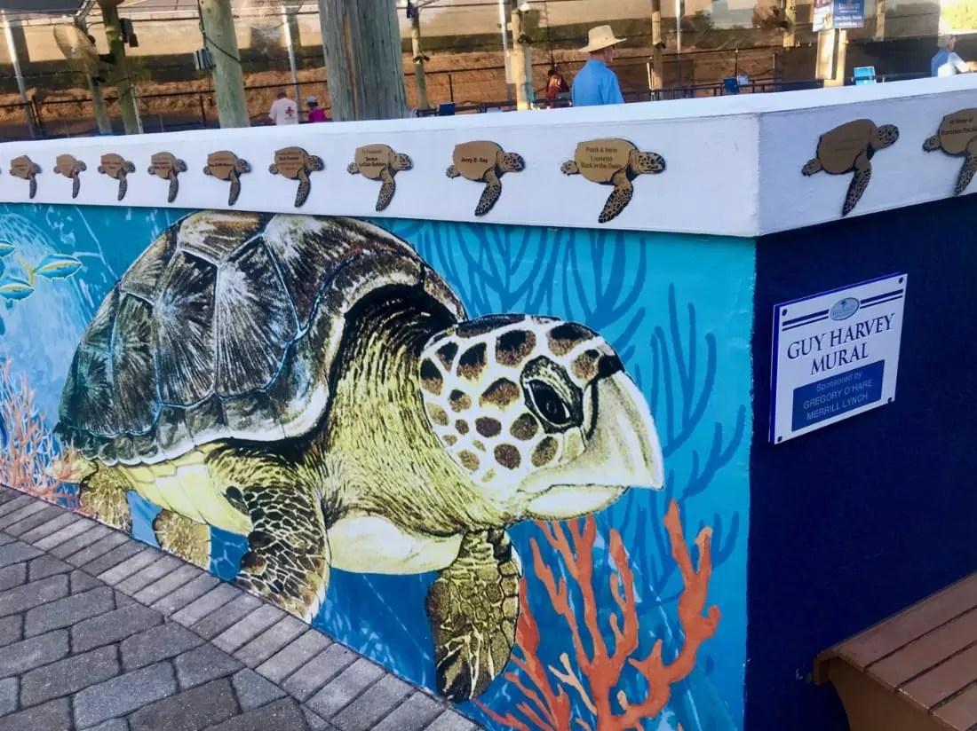 mural hospital de tartarugas