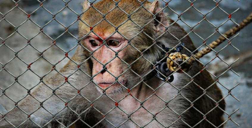 dia mundial animais