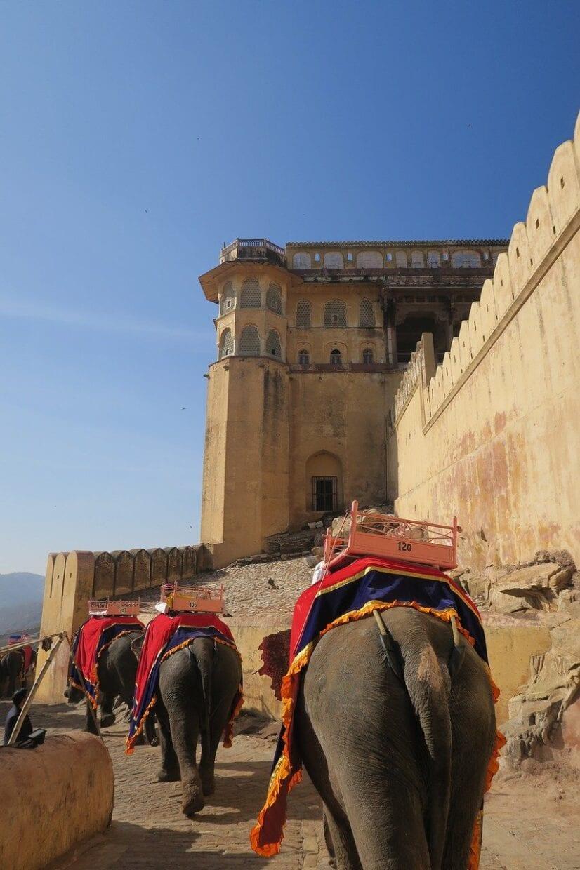 Crueldade com elefantes na Índia
