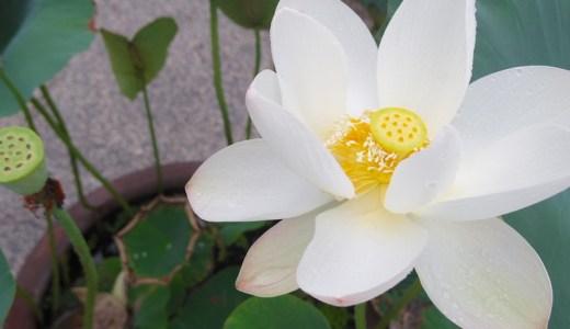 6/19-24  六十干支の風景巡り・天天シリーズ