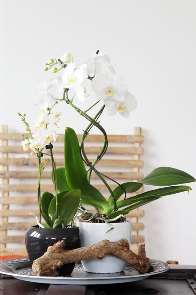 weiße Orchidee vor Bambuswandboard