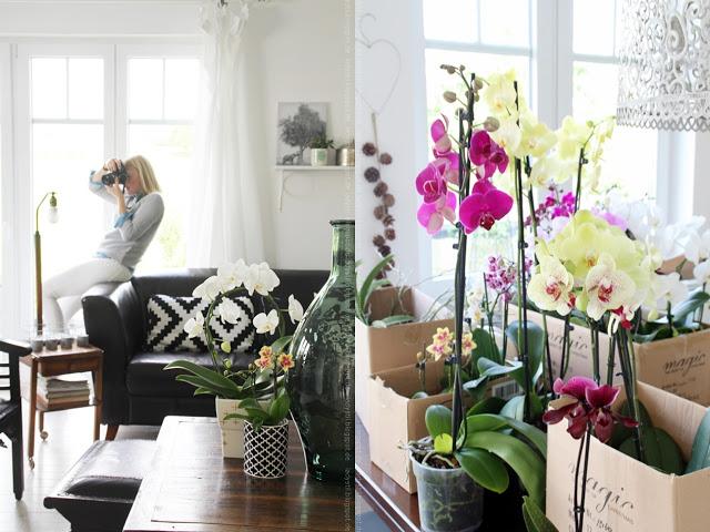 Anika vom Blog stilreich fotografiert Orchideen