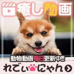 れでぃにゃん | 癒し系動物動画紹介サイト