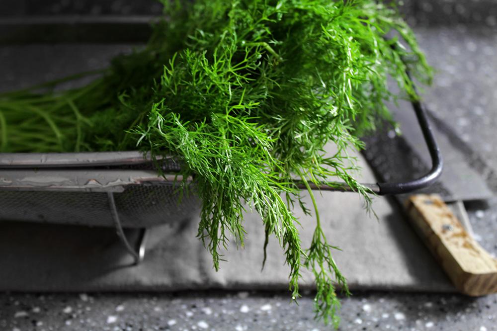 fennel-potsticker2