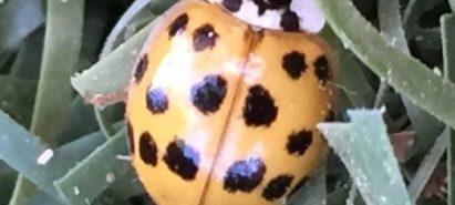 Ladybug in the News!