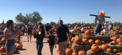 Pumpkin Patch Season Has Arrived – Tips for Pumpkin Patching in Arizona