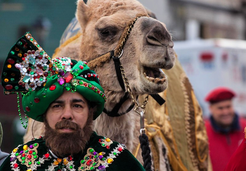 camels at the three kings parade NYC