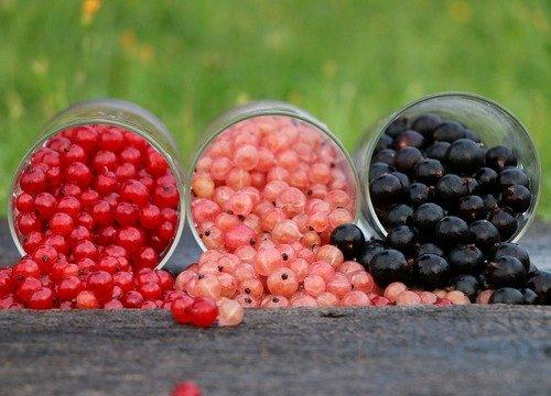 Сон ягоды черной смородины