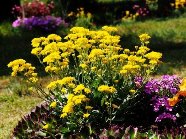 Как правильно посеять цветы под зиму? Плюсы и минусы ...