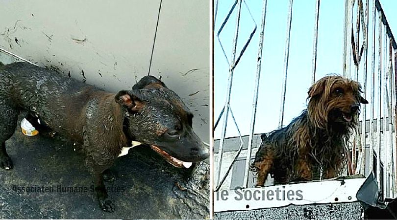 Dogs Rescued from Roof Covered in 'Boiling, Bubbling' Hot Tar