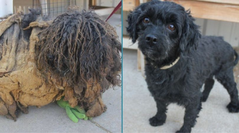 These are America's Top Shelter Dog Makeovers